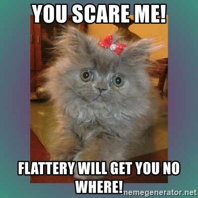 cute cat - YOU SCARE ME! FLATTERY WILL GET YOU NO WHERE!