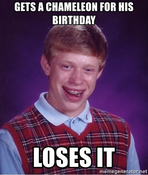 Bad Luck Brian - gets a chameleon for his birthday loses it