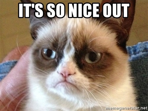 Angry Cat Meme - It's so nice out