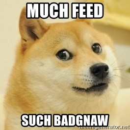 Dogeeeee - Much feed such badgnaw