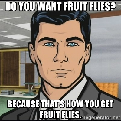 Archer - Do you want fruit flies? Because that's how you get fruit flies.