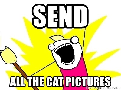 X ALL THE THINGS - Send All the cat pictures