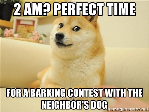 so doge - 2 am? perfect time  for a barking contest with the neighbor's dog