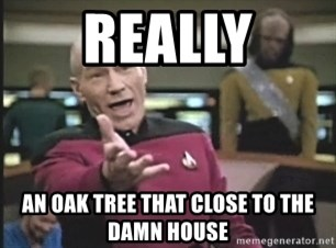 Captain Picard - Really An oak tree that close to the damn house