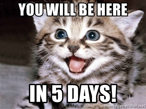 HAPPY KITTEN - You will be here in 5 days!