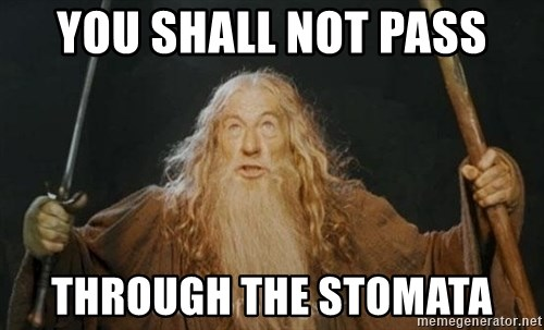 You shall not pass - You shall not pass through the stomata