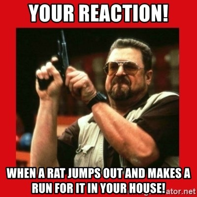 Angry Walter With Gun - Your reaction! When a rat jumps out and makes a run for it in your house!