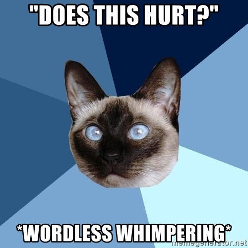 "Chronic Illness Cat - ""Does this hurt?"" *wordless whimpering*"
