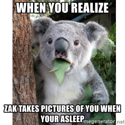 surprised koala - When you realize Zak takes pictures of you when your asleep