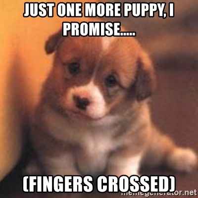 cute puppy - Just one more puppy, I promise..... (fingers crossed)