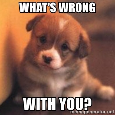 cute puppy - What's wrong With you?
