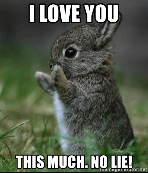 I love you THIS MUCH. No lie! - Cute Bunny | Meme Generator