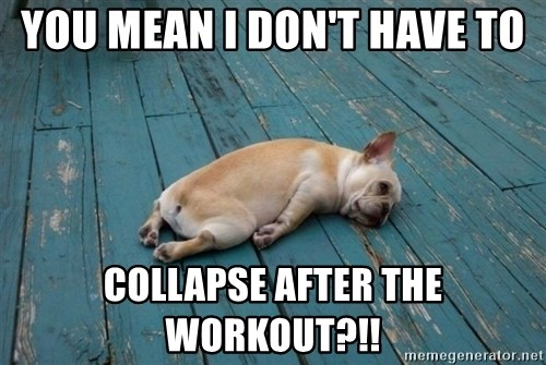 You Mean I Don T Have To Collapse After The Workout Tired Dog
