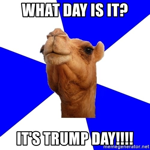 what day is it its trump day what day is it? it's trump day!!!! classics camel meme generator