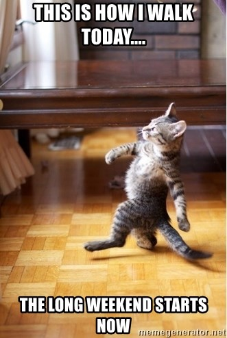 walking cat - This is how i walk today....  The long weekend starts now