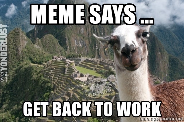 Bossy the Llama - meme says ... Get back to work