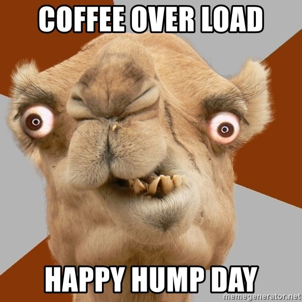 Crazy Camel lol - coffee over load Happy Hump Day