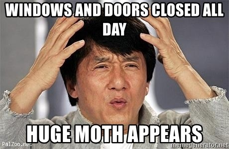 Confused Jackie Chan - Windows and doors closed all day HUGE moth appears