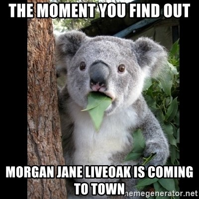 Koala can't believe it - The moment you find out  Morgan Jane Liveoak is coming to town