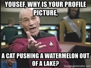 Picard Wtf - Yousef, why is your profile picture, a cat pushing a watermelon out of a lake?