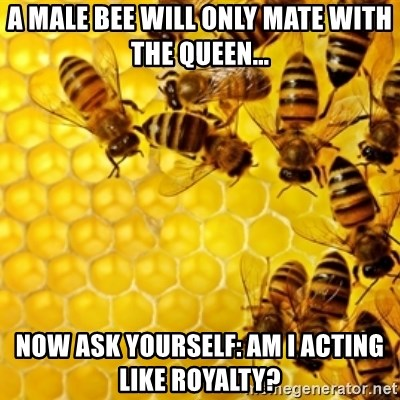 Honeybees - A male bee will only mate with the QUEEN... Now ask yourself: am I acting like royalty?