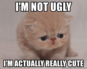 Super Sad Cat - I'm not ugly I'm actually really cute