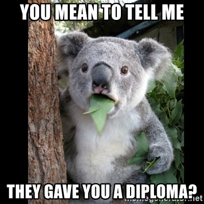 Koala can't believe it - You mean to tell me They gave you a diploma?