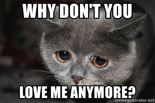 53476992 why don't you love me anymore? sadcat meme generator