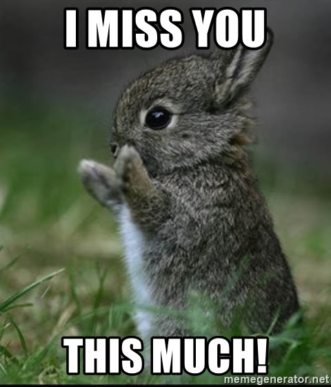 I miss you this much! - Cute Bunny | Meme Generator