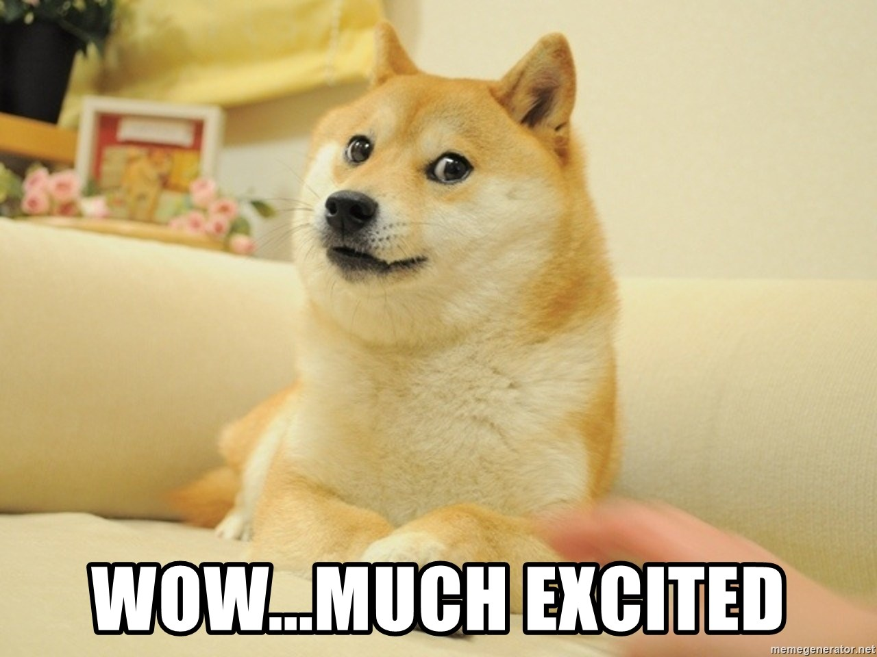 so doge - wow...MUCH EXCITED
