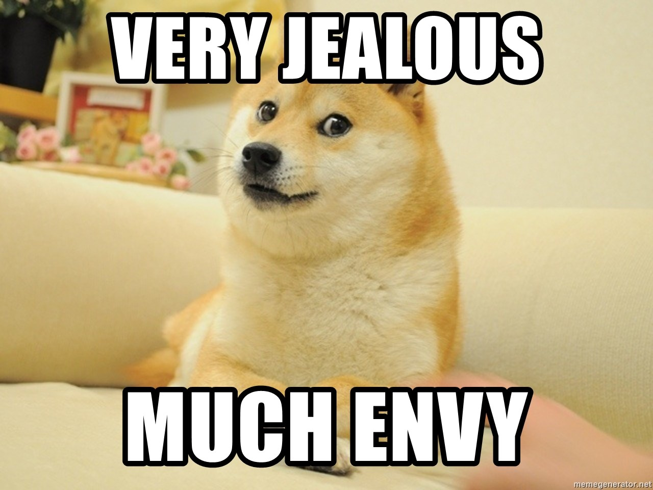 so doge - very jealous much envy