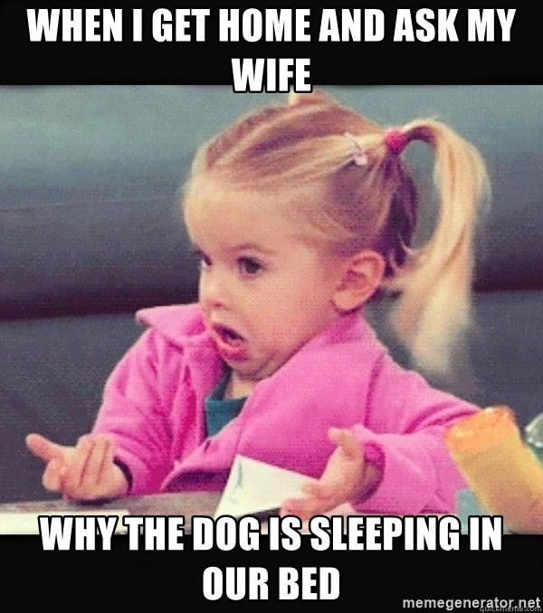 I have no idea little girl  - When I get home and ask my wife why the dog is sleeping in our bed