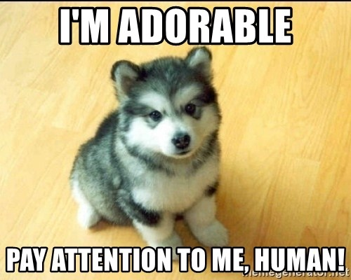 Baby Courage Wolf - i'M ADORABLE PAY ATTENTION TO ME, HUMAN!