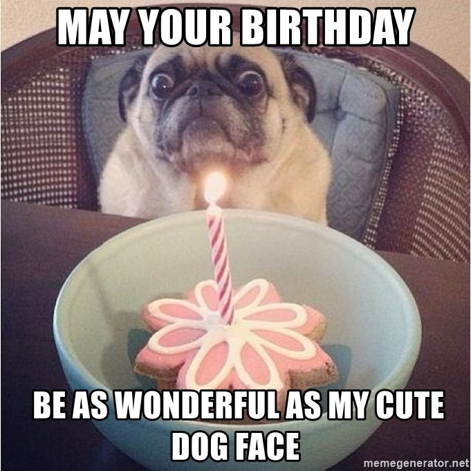 May Your Birthday Be As Wonderful As My Cute Dog Face Birthday Pug