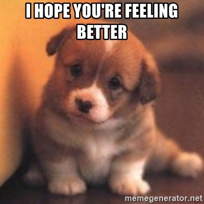 cute puppy - I hope you're feeling better