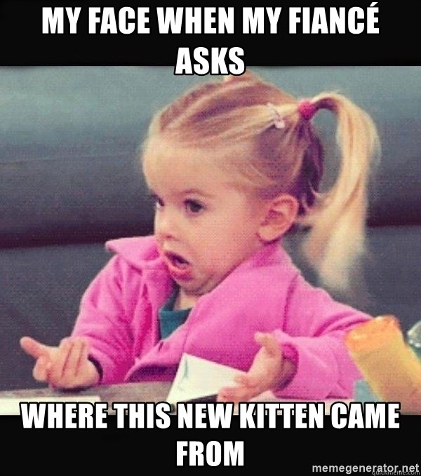 I have no idea little girl  - My face when my fiancé asks Where this new kitten came from