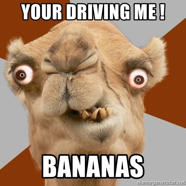 your driving me ! BANANAS - Crazy Camel lol | Meme Generator