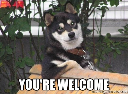 Youre Welcome Meme Dog