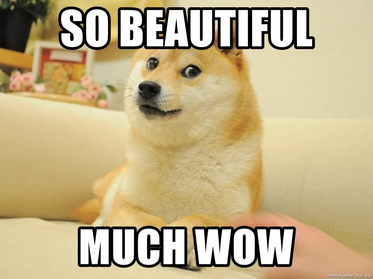 c76491157 so beautiful much wow - so doge