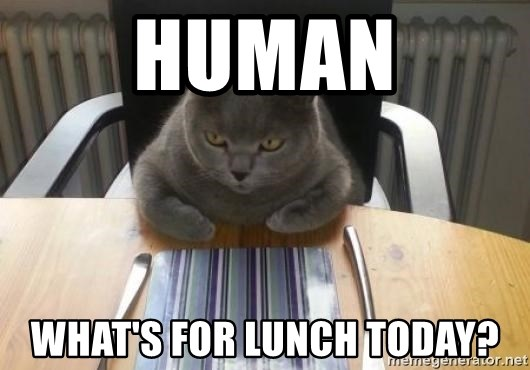 Hungry cat wants food - Human what's for lunch today?