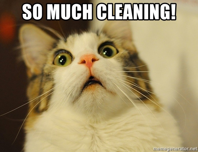panic cat face - SO MUCH CLEANING!