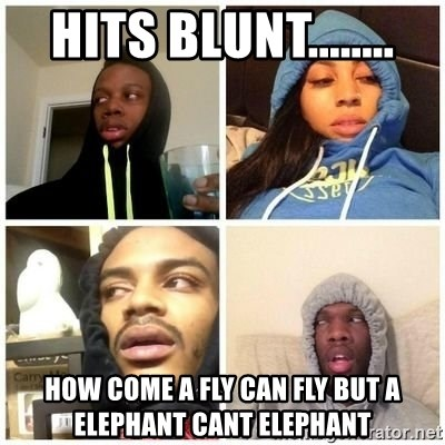 Hits Blunts - hits blunt........ how come a fly can fly but a elephant cant elephant