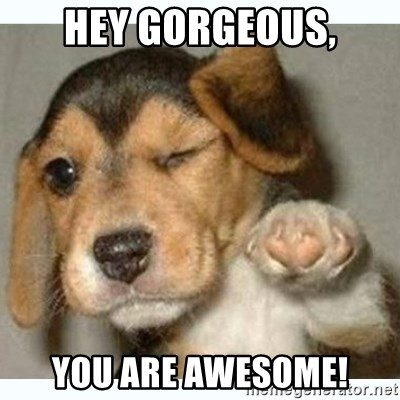 fist bump puppy - Hey gorgeous, you are awesome!