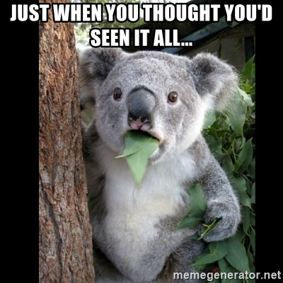 8382d8228ce1 Just when you thought you d seen it all... - Koala can t believe it ...