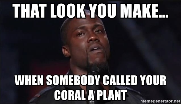 Kevin Hart Face - That look you make...  When somebody called your coral a plant