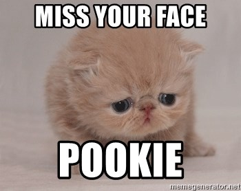 Super Sad Cat - Miss your face Pookie