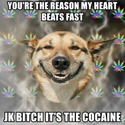 Youre The Reason My Heart Beats Fast Jk Bitch Its The Cocaine Stoner Dog Meme Generator