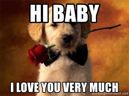 cute dog with roses hi baby i love you very much