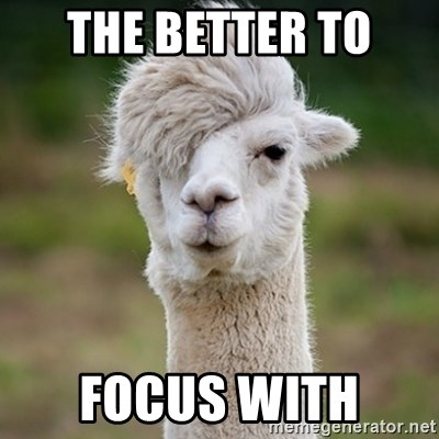 Hipster Llama - The better to  Focus with