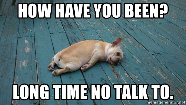 How Have You Been Long Time No Talk To Lazy French Bulldog Meme Generator